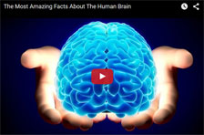 >The Most Amazing Facts About The Human Brain